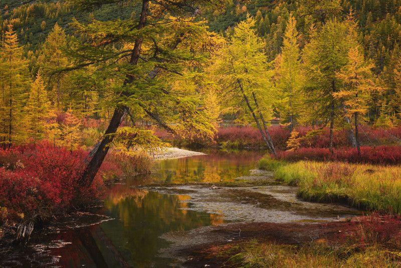 Осень у ручья...photo preview