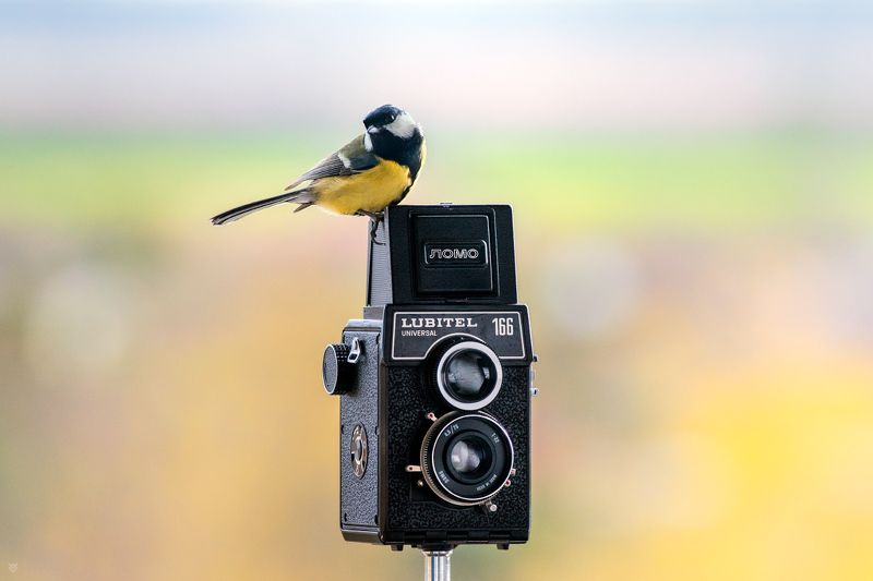 bird, old camera, wildlife Photographerphoto preview