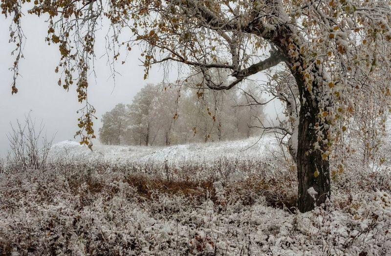 осень, туман, снегопад. С зимою осень повстречалась..photo preview