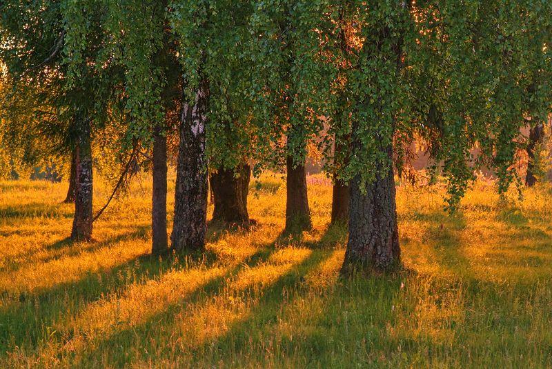 лето, природа, закат На исходе дняphoto preview