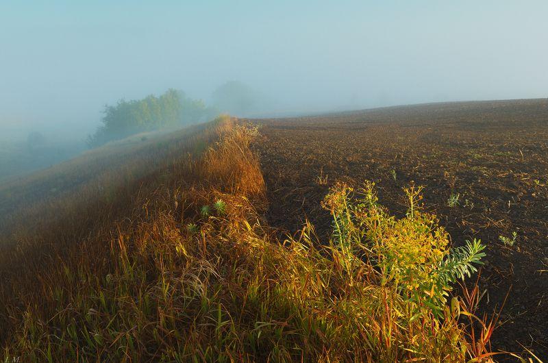 autumn, fog, light, morning, sunrise, осень, поля, рассвет, свет, туман, Утро, Misty, foggy, паутина, роса, поле \