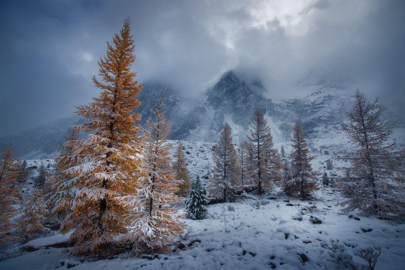 алтай, горы, осень, актру В рыжем одеянииphoto preview