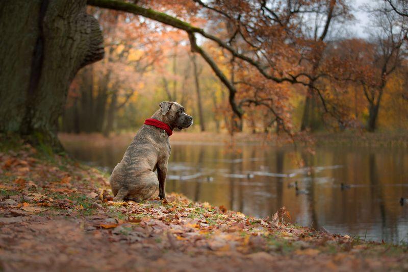 Осенний Кане Корсоphoto preview
