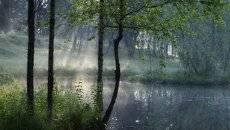 У пруда.....