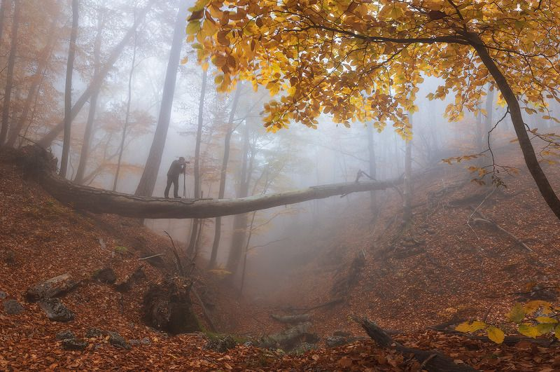ай-петри,буковый, лес,туман,утро,осень,крым, Сказка Крымского лесаphoto preview