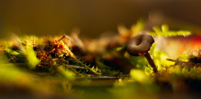 осень, беларусь, природа Картинки из осеннего леса 13.photo preview
