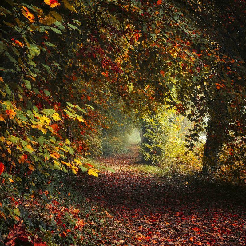 magic garden autumn leafs path trees colours jesien poland mist Magic Gardenphoto preview