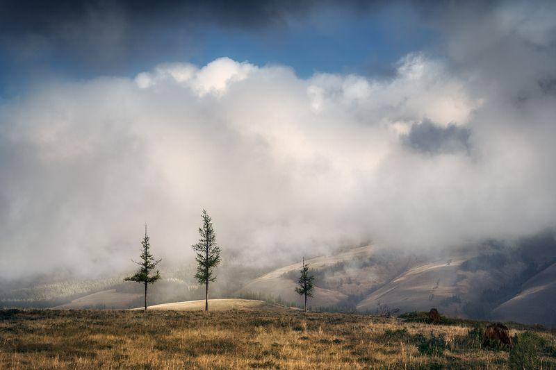 пейзаж, природа, утро, раннее, туман, облака, красивая, горы, хребет, лиственница, дерево, холодное Курайphoto preview