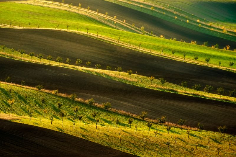 trees, landscape, moravia Trees at sunsetphoto preview