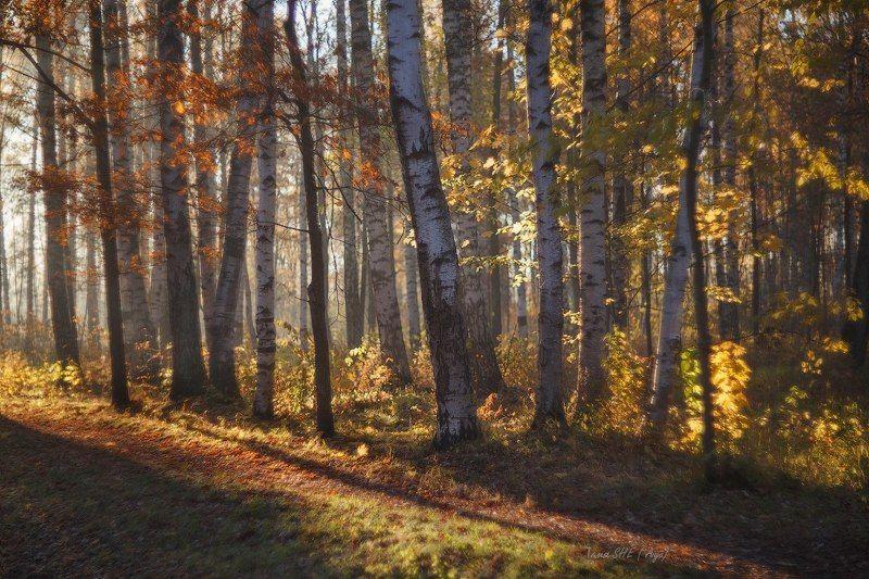 пушкин, питер, царскоесело, царское, природа, пейзаж, отдельный, нижний Ощущение осени...photo preview