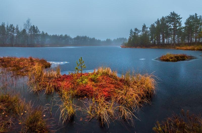 фототур, ленинградская область, деревья, сосна, остров, болото, рассвет, туман, мох, трава, осень, октябрь, Осенний островокphoto preview