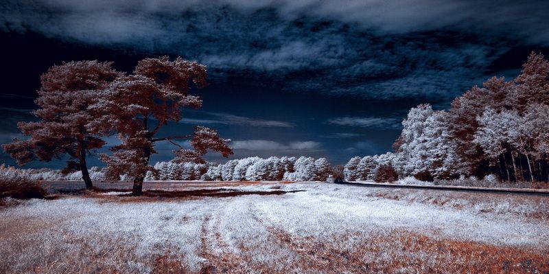 infrared,ик-фото,инфракрасное фото,инфракрасная фотография,пейзаж,природа,беларусь,лето Дуэт. Инфракрасная фотография.photo preview