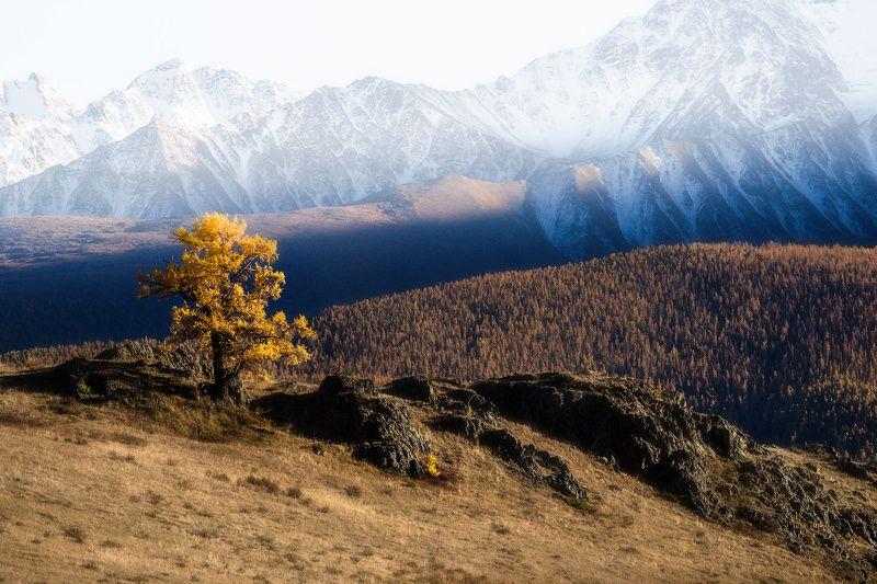 алтай, горы, осень На контрастахphoto preview