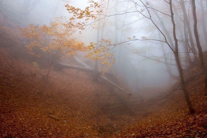 Таинственное утро в лесуphoto preview