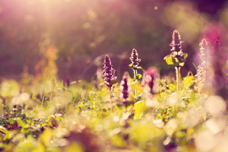 nature, flower´s, macro, landcsape, sunset, bokeh, lens flare, flare, light, color, plants, natural, природа, цветы, макро, пейзаж, закат, боке, вспышка объектива, вспышка, свет, цвет, растения, естественный Поздно вечеромphoto preview