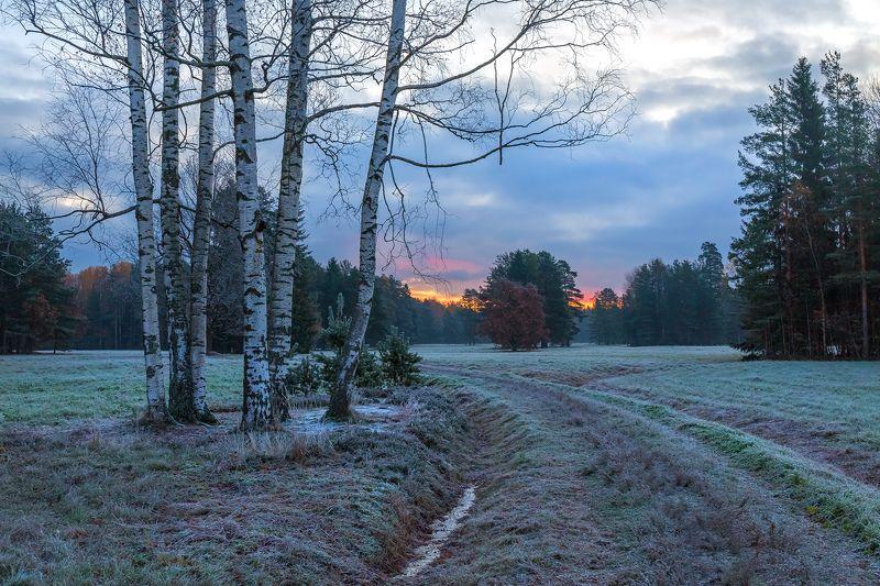 санкт-петербург, парк павловск, иней, осень, рассвет, береза, сосна, небо. Заря, ещё синеют сумеркиphoto preview
