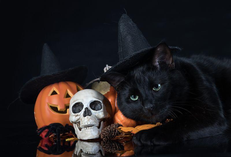 хэллоуин, кот, чёрный кот, black cat, cat, животные, кузя, нalloween Хэллоуин с чёрным котом - Happy Нalloweenphoto preview