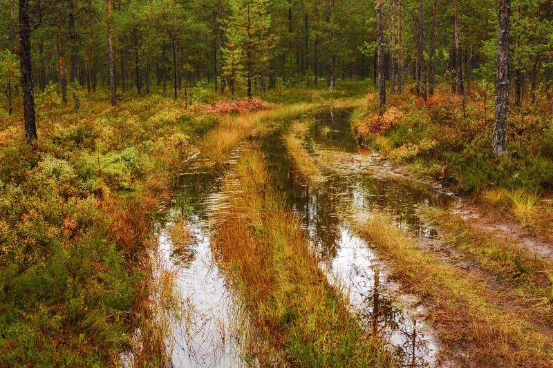 осень пинега лес деревья кусты дорога лужи отражения Невозвратно в осеньphoto preview