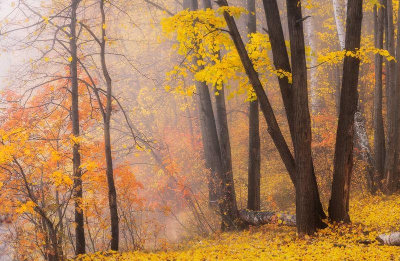 Прогулка в осеньphoto preview