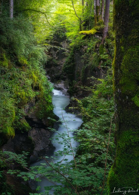 awesome, bavaria, bayern, bourn, breathtaking, brook, bush, canyon, cliff, fabulous, fantastic, forest, germany, glow, green, hintersee, moss, mystic, mythical, natur, outdoors, ramsau, ramsauer ache, rill, river, rock, stream, stunning, tree, treetrunk.  Zauberwaldphoto preview