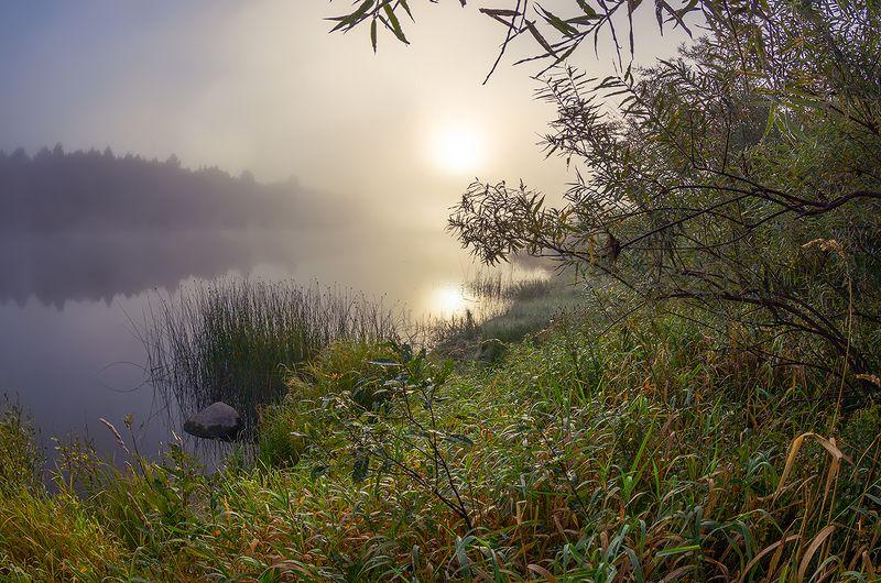 молога туман осень река сентябрь про прохладное утроphoto preview