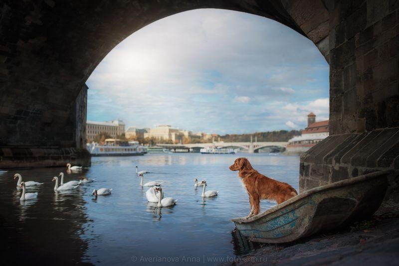 собака, природа под мостомphoto preview