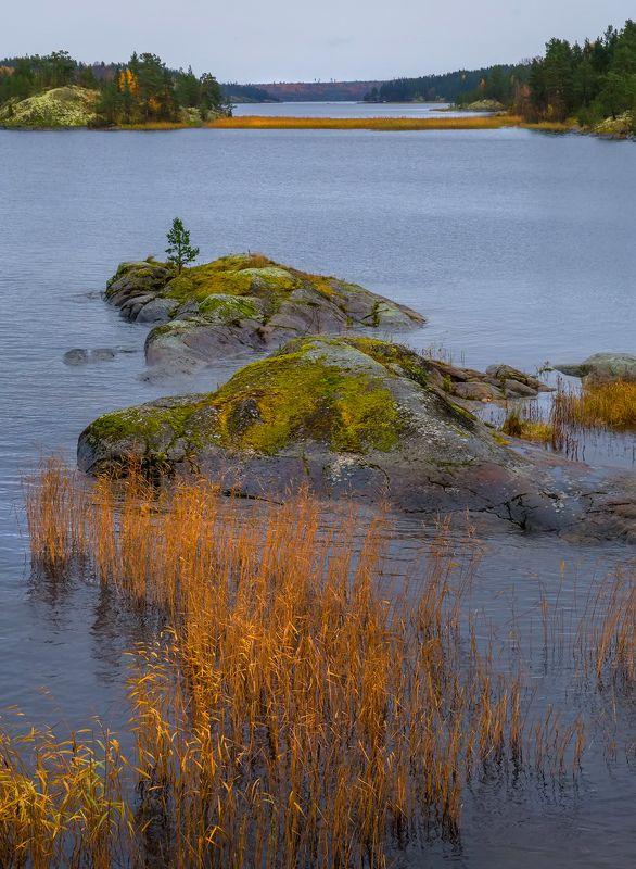 ладожское озеро, карелия, шхеры, природа, скалы, вода, лес, сосны, остров, охотник, непогода, осень, тростник. Состояние непогодыphoto preview