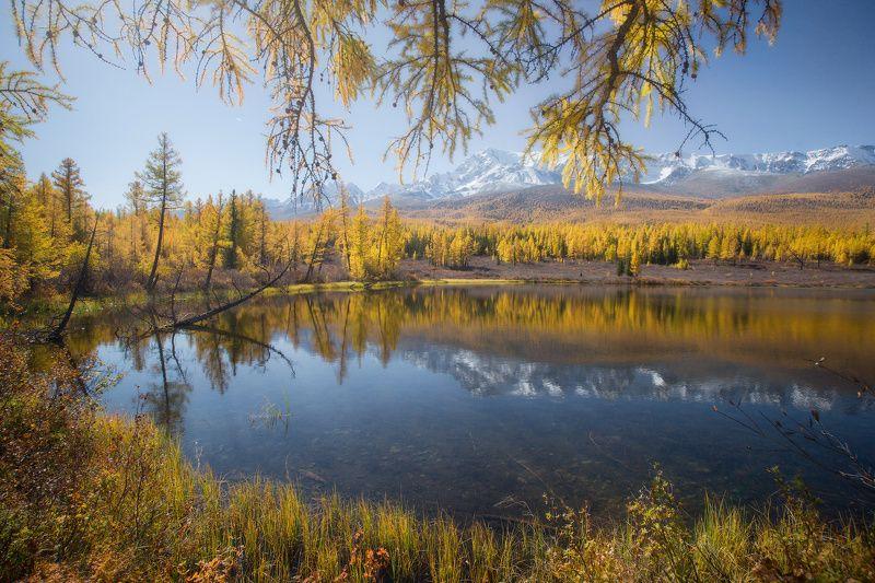 алтай, горы, осень, куркурек, лесное Лесноеphoto preview