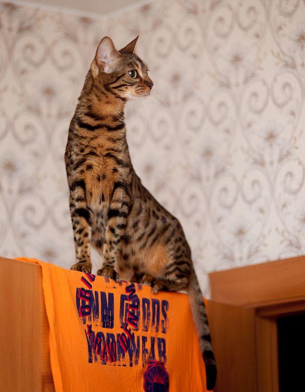 mr.filler Жирафик, комнатный :)photo preview