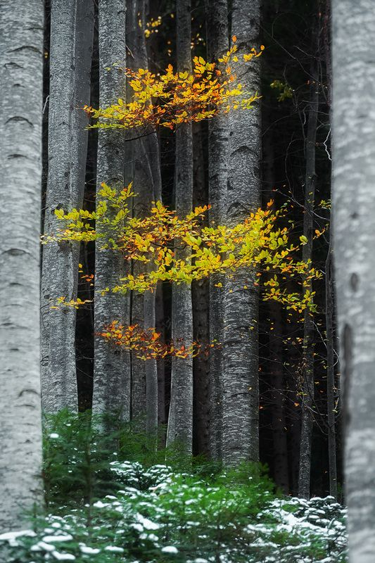 Autumn 2017photo preview