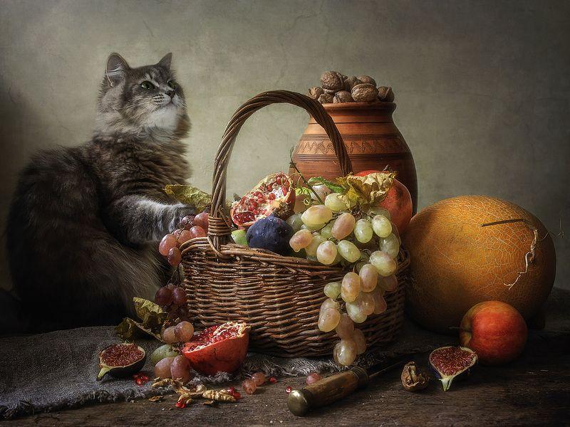 постановочное фото, художественное фото, фруктовый натюрморт, домашние животные, кошка Масяня, Ревизия фруктовой корзиныphoto preview