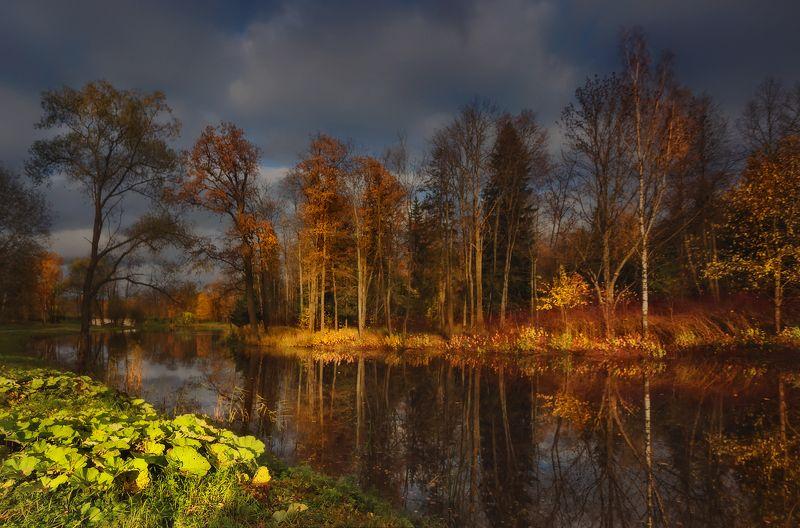 питер, пушкин, царскоесело, царское, александровский, осень, пейзаж Миг . . .photo preview