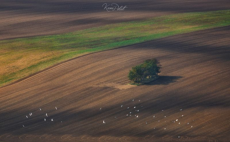 Moravian texturephoto preview