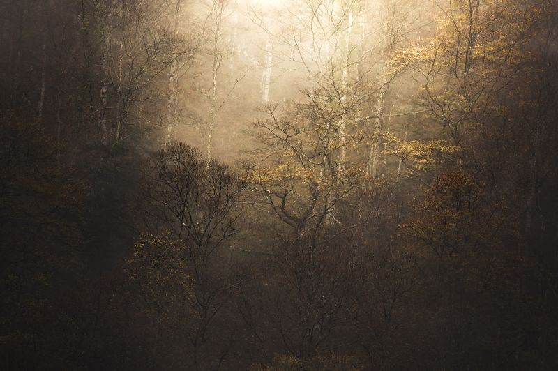 nature, landscapes, nature photography, autumn, forest, fall, trees, tolkien, lord of the rings, twin peaks, hell, flames Fire Walk With Mephoto preview