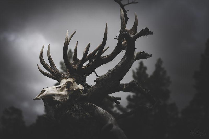 nature, death, skull, celtic mythology, deer, bones, pagan, cult of luna Cernunnos Pathphoto preview