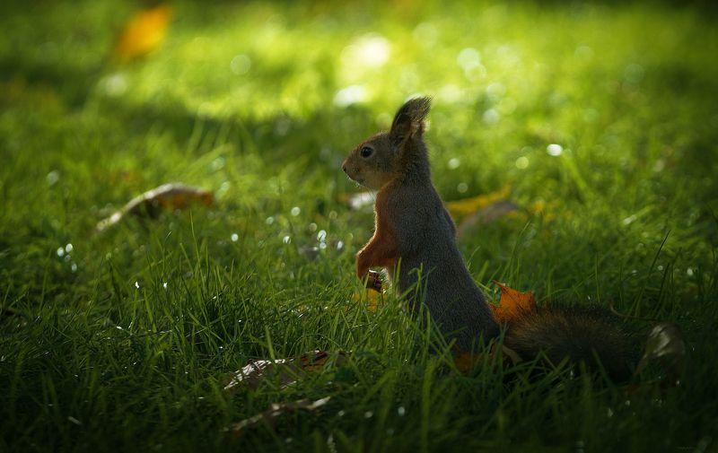 природа, лес, животные, птицы Чудо, в ожидании чудаphoto preview