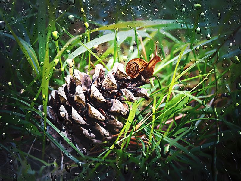 улитка, макро, лес, природа, шишка Привалphoto preview