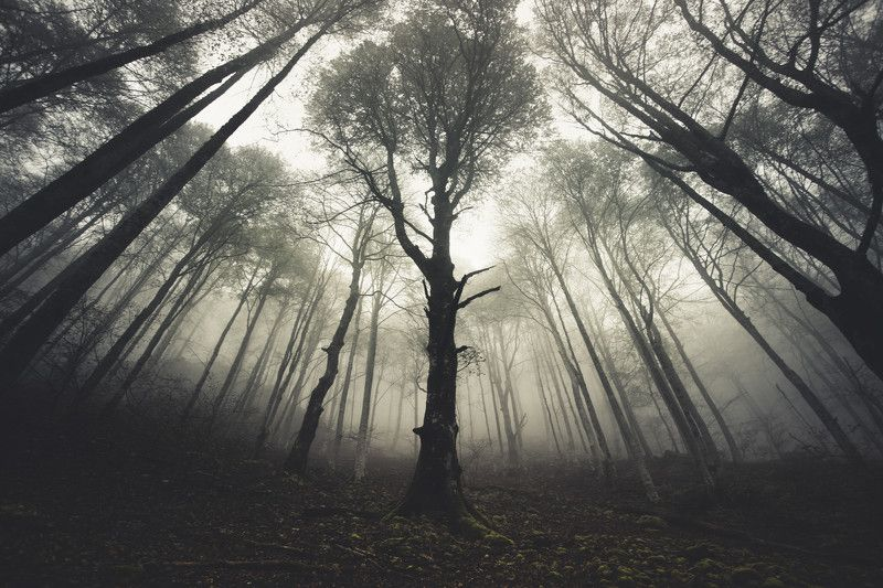 forest, nature, mist, fog, trees, pyrenees, national park, france, tolkien, lord of the rings, onodrim, pagan, soul Si Monumentum Requires, Circumspicephoto preview