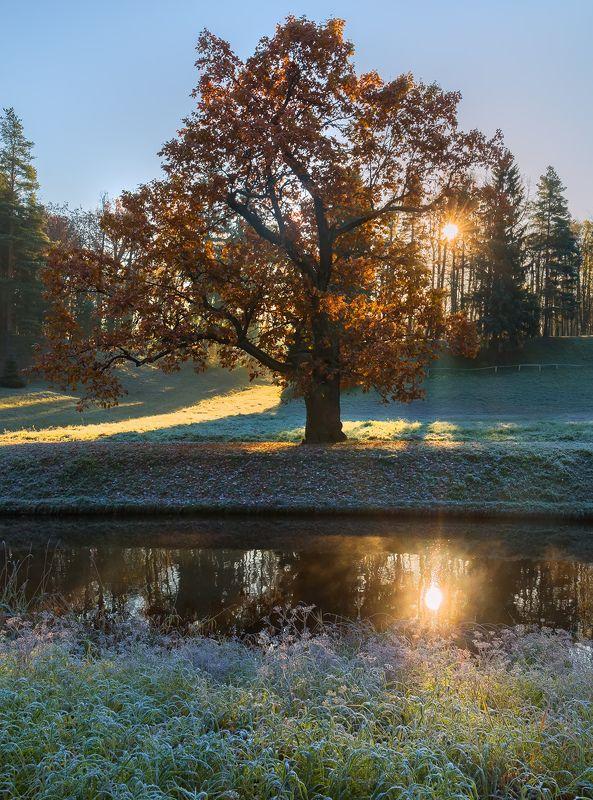 санкт-петербург, парк павловск, иней, осень, рассвет, дуб, листья, река славянка, солнце, дерево, лес, отдых, одинокое дерево. Павловские осенние дубы.photo preview