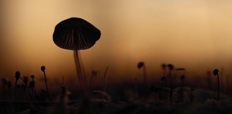 макро,осень,природа,лес,беларусь Малютка - привидение.photo preview