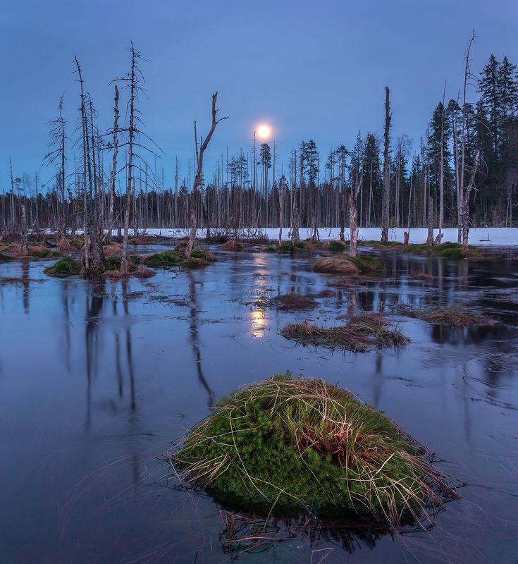 болото, луна, полнолуние, весна, панорама, сумерки Восход луны на болотеphoto preview
