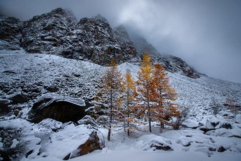 алтай, горы, осень, актру Горные красавицыphoto preview