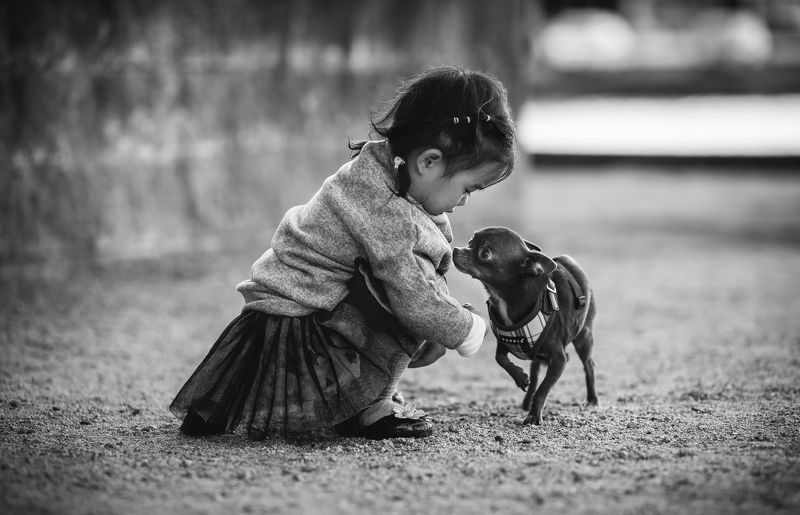 kid, childhood, dog, chiwawa, connection, bw, friends Celine and chiwawaphoto preview