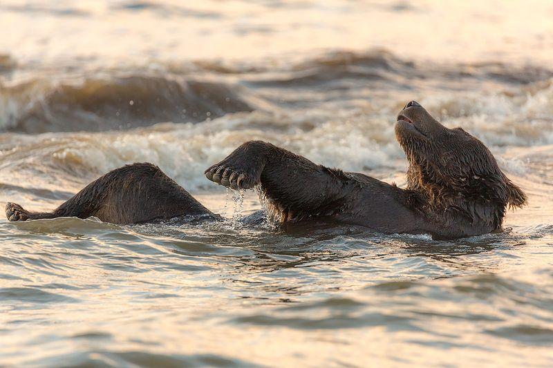 Камчатка, лето, природа, путешествие, медведь, отдых, закат Релаксphoto preview