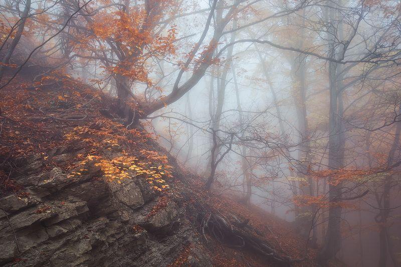 ай-петри,буковый, лес,туман,утро,осень,крым, Тайны старого лесаphoto preview