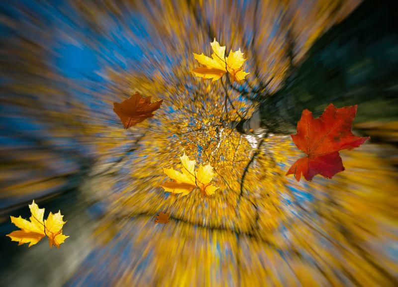 autumn, leaf,sky Autumn rushingphoto preview