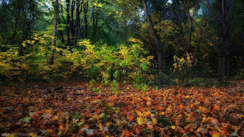 лес осень деревья листья природа пейзаж Осени уютный уголокphoto preview