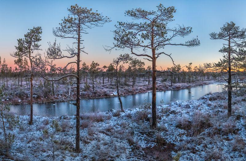 фототур, ленинградская область, деревья, сосна, болото, рассвет, осень, иней, мороз, озеро, снег, заморозки. Морозная заря - зеркальная водаphoto preview