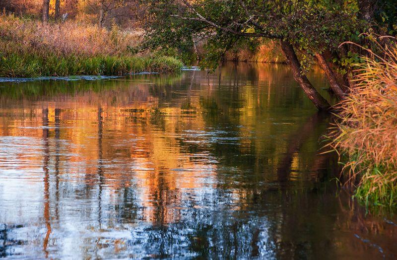 золотая, осень, река, старица, отражения, мещёра, рязанская область Красочные осенние этюдыphoto preview