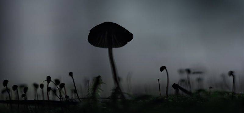 лес, осень, беларусь, природа Не заблудиться в осеннем тумане.photo preview